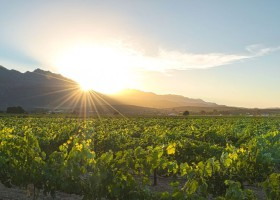 Homestead - Sunrise over vineyards Andre v Rooyen